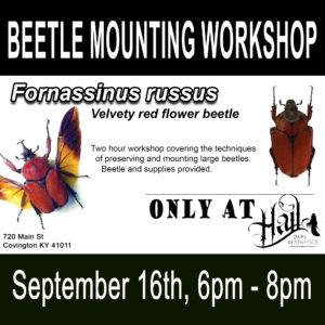 BEETLE MOUNTING WORKSHOP