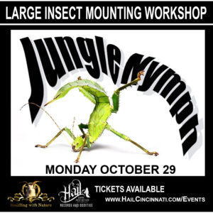 Jungle Nymph Insect Mounting Workshop