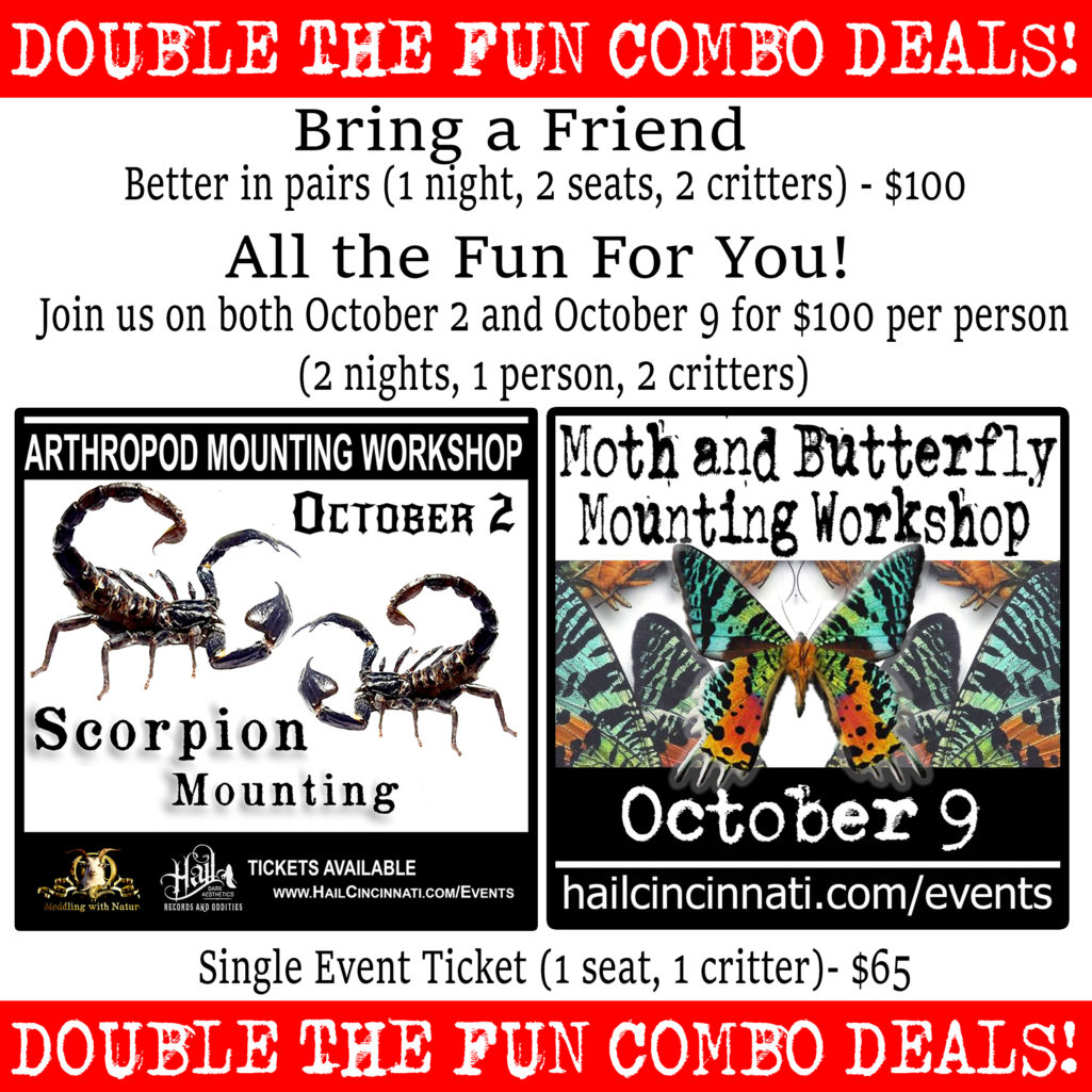 Double The Fun Combo Deals