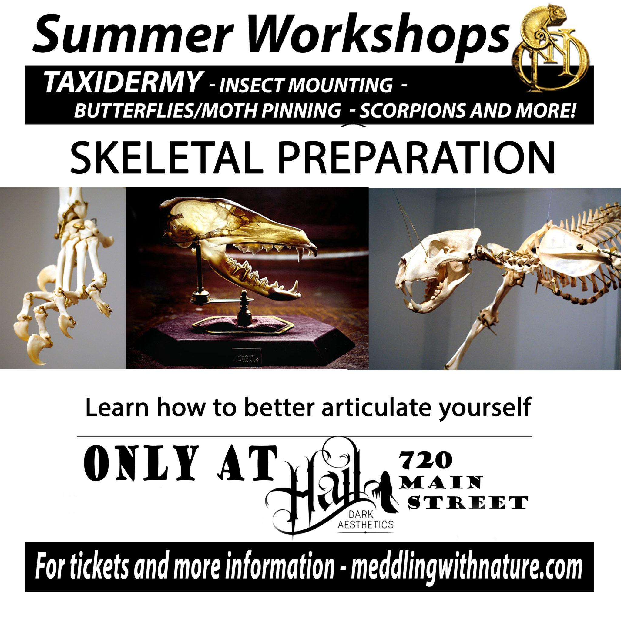 Skeletal Preparation and Articulation