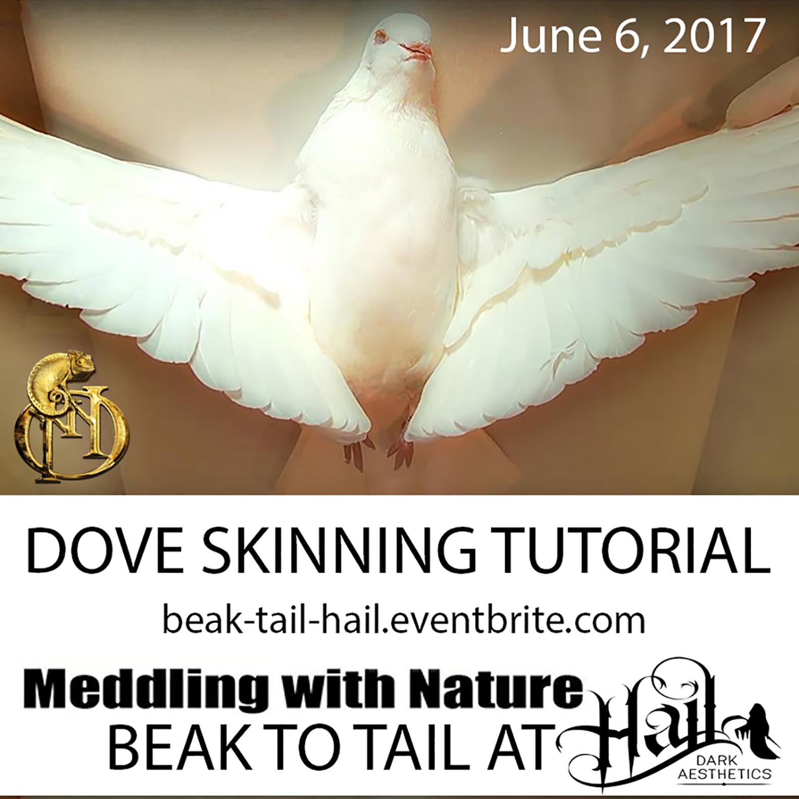 Skinning Tutorial – Beak to Tail