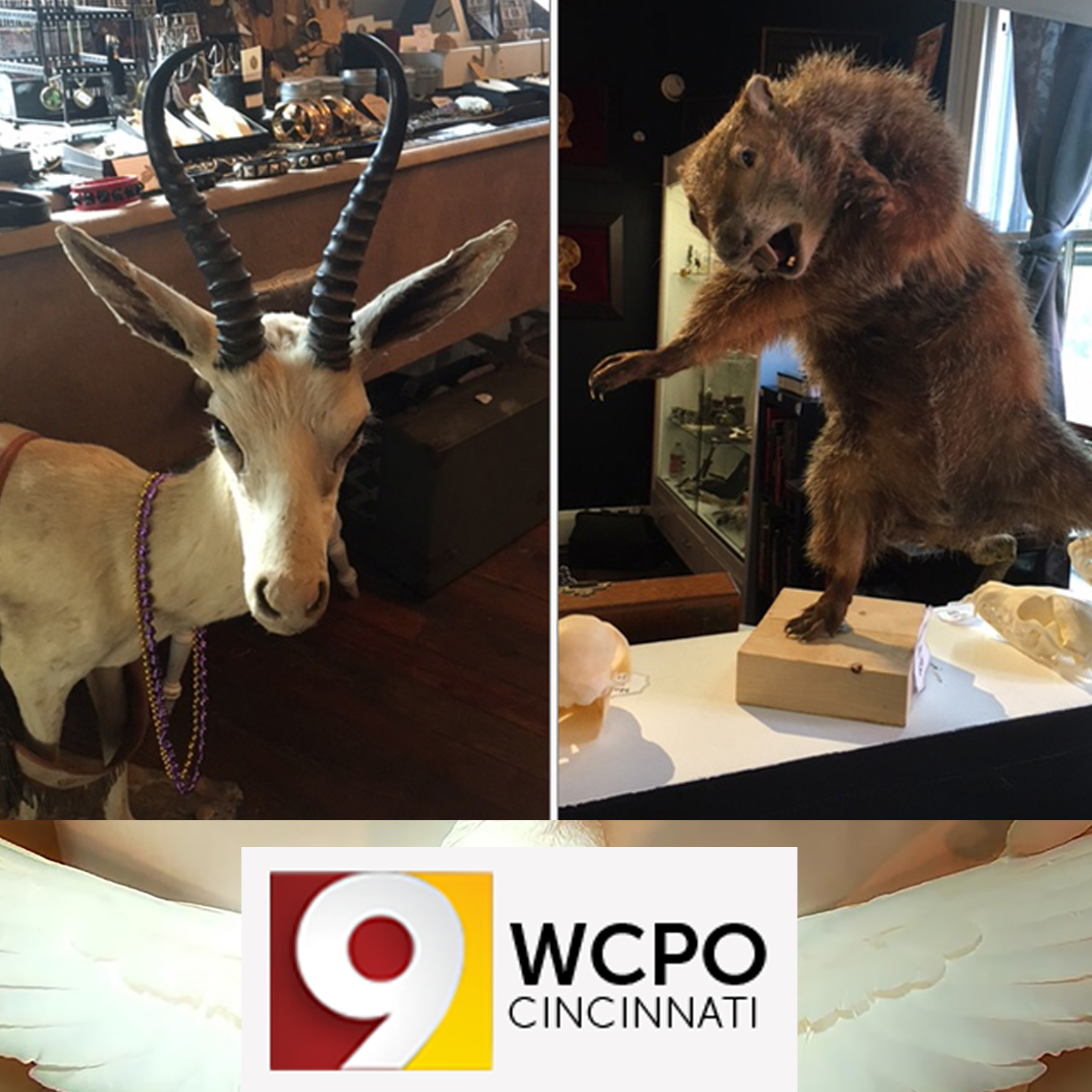 WCPO – At Hail Dark Aesthetic in Covington, the macabre, the morbid and the music reign