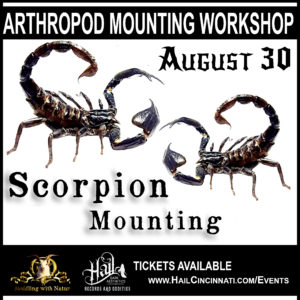 Scorpion Mounting