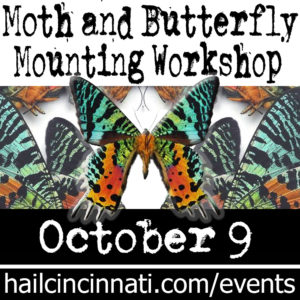 Butterfly Pinning and Mounting