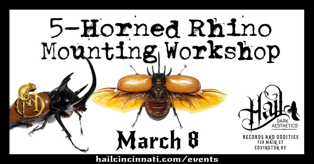 5-Horn Rhino Beetle Mounting Workshop March 8, 2020