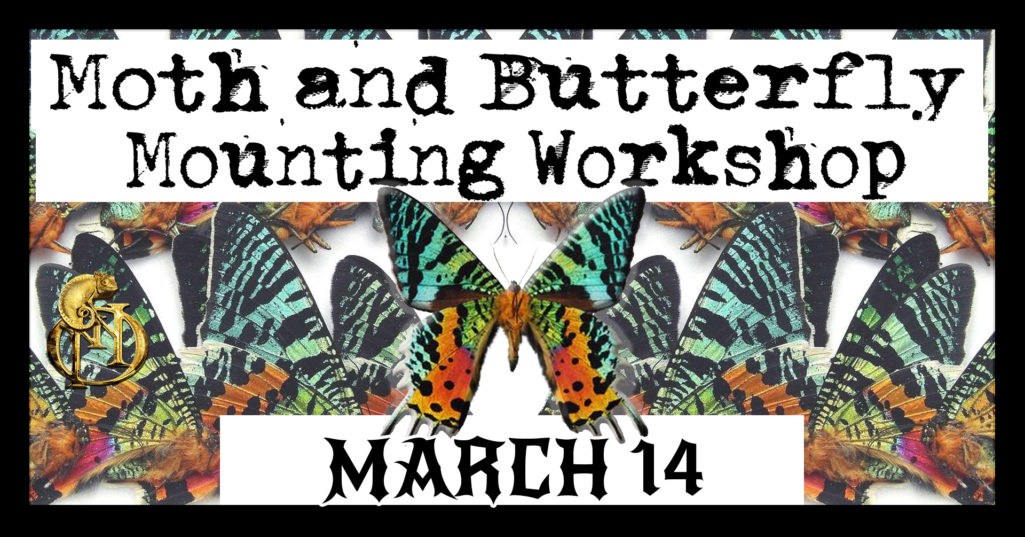 Butterfly Mounting March 14 2020